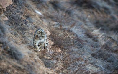 2 poachers held with leopard skin