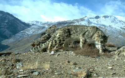 GSLEP Meeting in Paris: Climate Change Impacts on Snow Leopards and Their Habitat