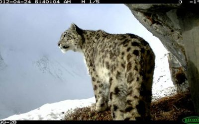 First ever Nationwide Snow Leopard (Panthera uncia) Survey in Bhutan