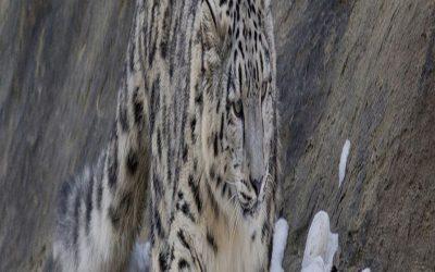 Семинар по незаконной торговле дикой природой для Центральной Азии